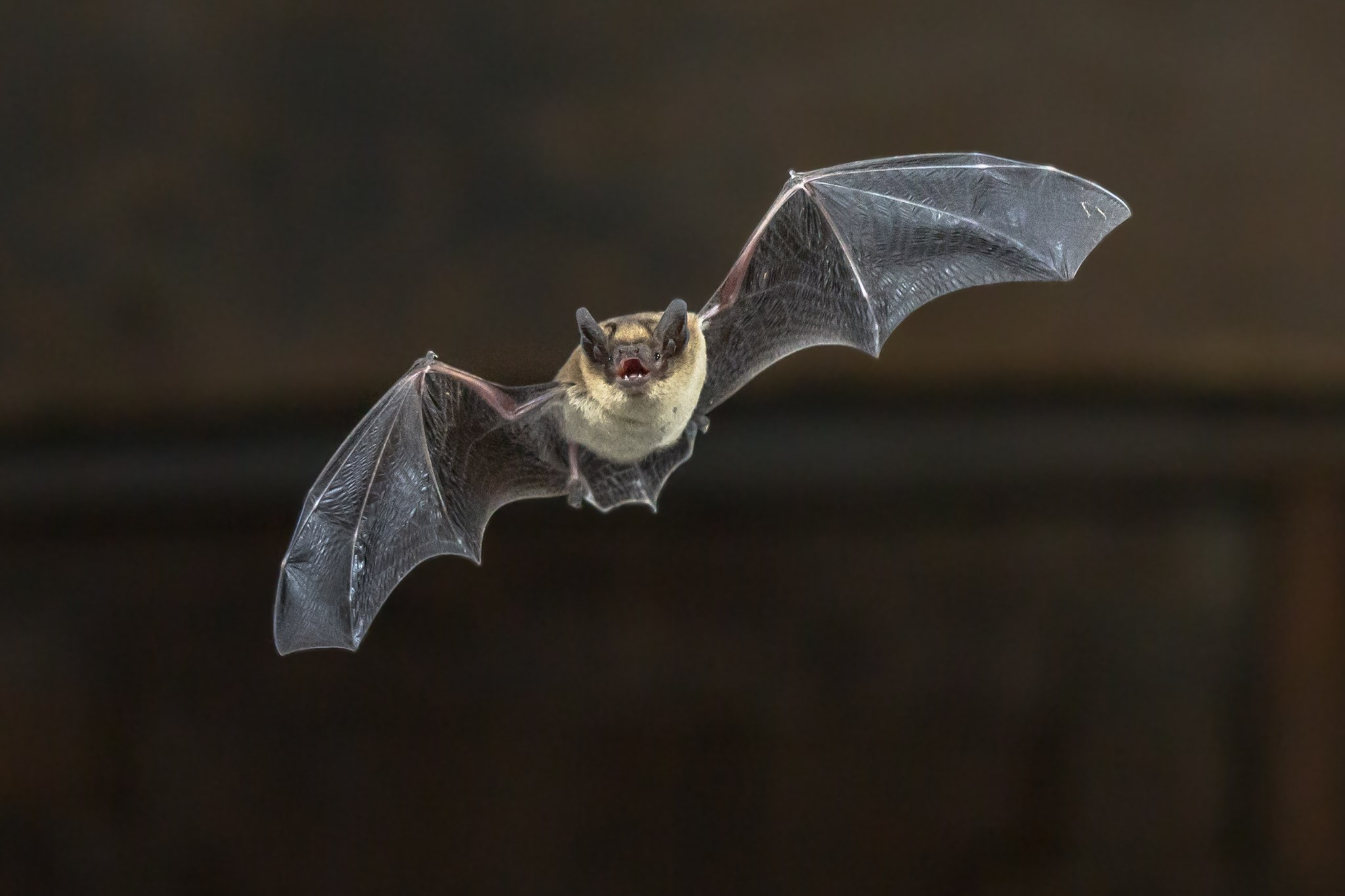 Image depicts picture of a bat on a dark background